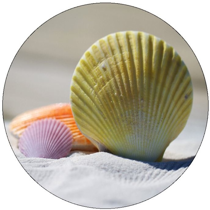 Sea Shell Pinback Buttons and Stickers