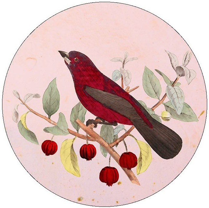 Bird Pinback Buttons and Stickers