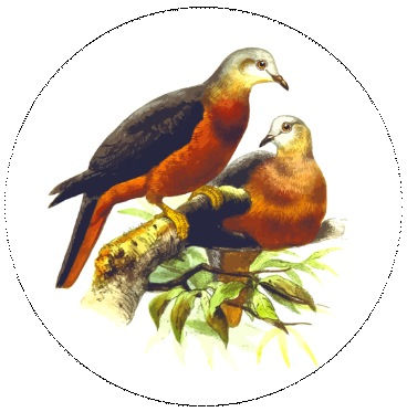 Birds Pinback Buttons and Stickers