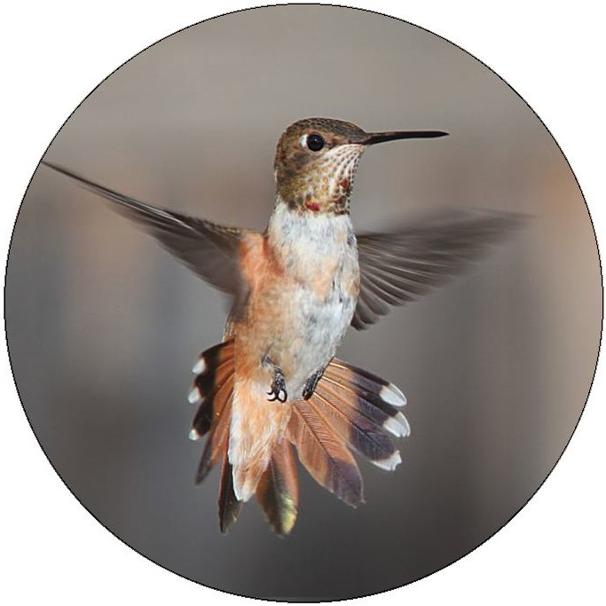 Humming Bird Pinback Buttons and Stickers