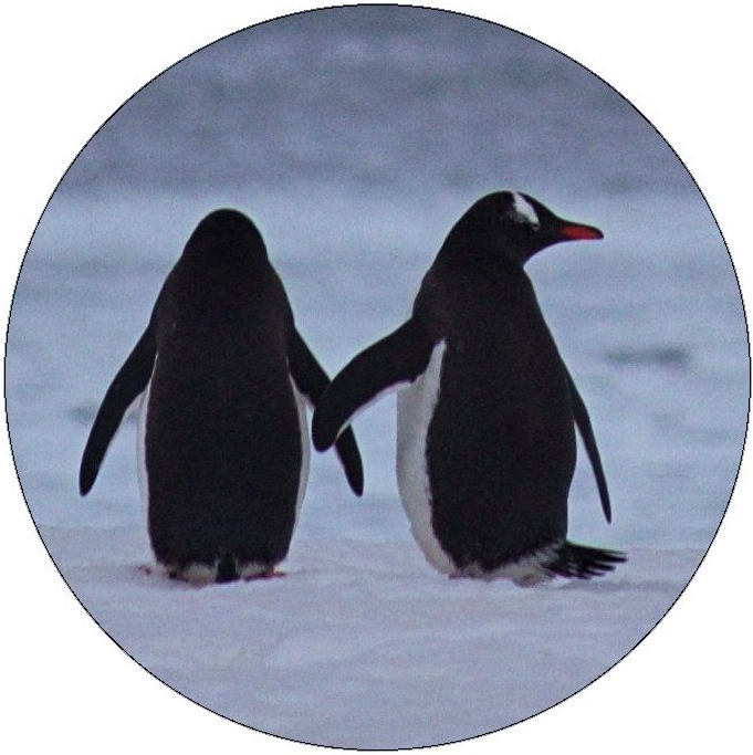 Penguin Pinback Buttons and Stickers