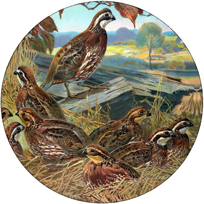 Quail Pinback Buttons and Stickers