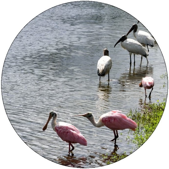 Spoonbill and Wood Stork Pinback Buttons and Stickers