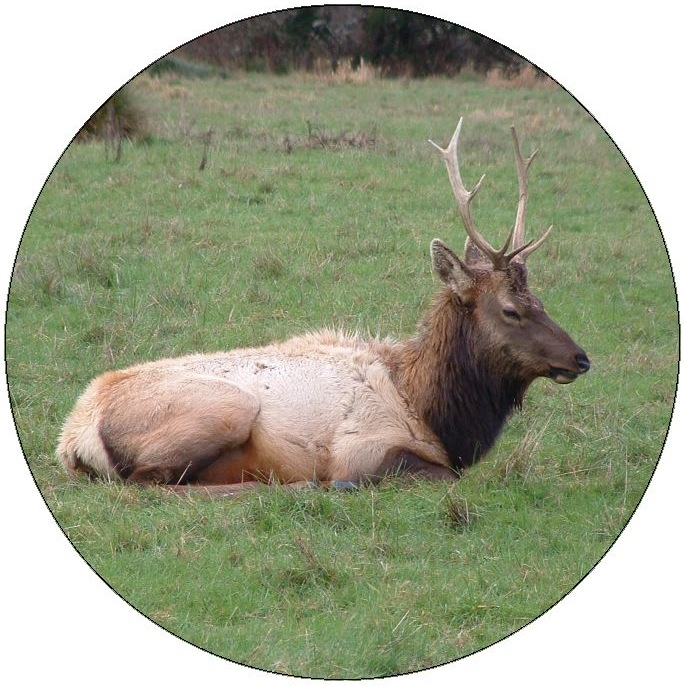 Elk Pinback Buttons and Stickers