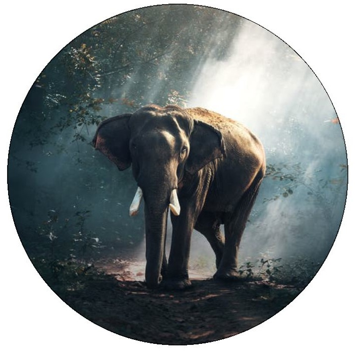 Elephant Pinback Buttons and Stickers