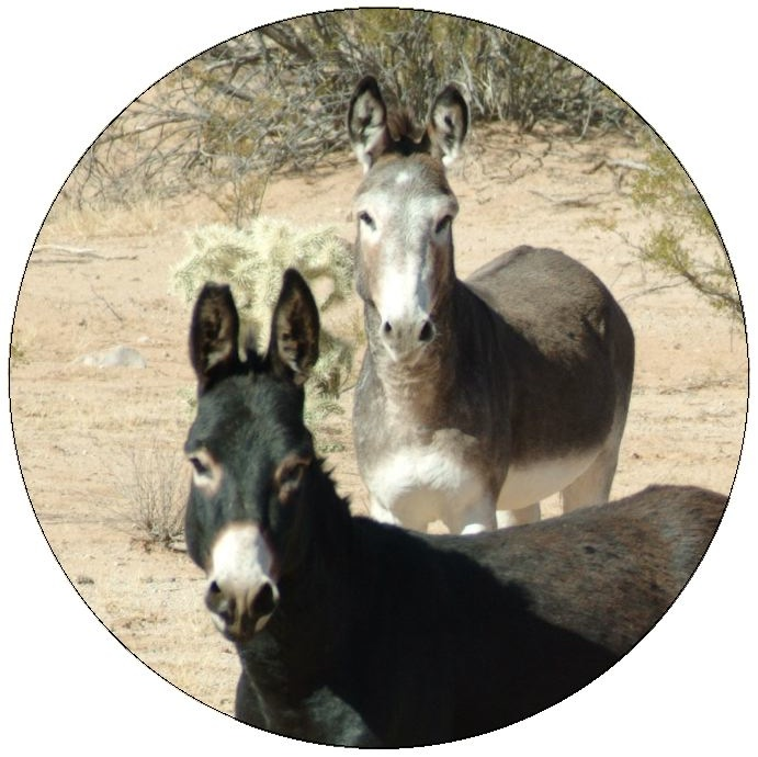 Donkey and Mule Pinback Buttons and Stickers