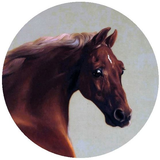 Horse Pinback Buttons and Stickers
