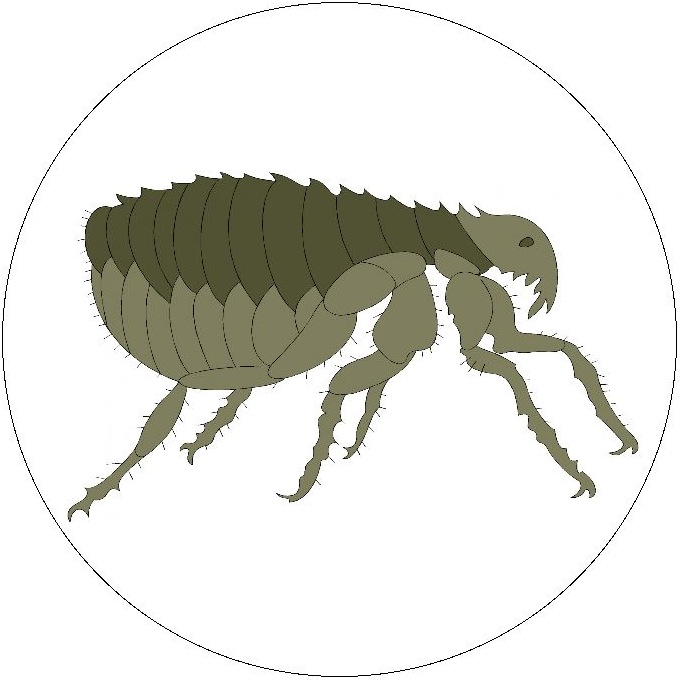Insect Clip Art Pinback Buttons and Stickers