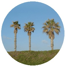 Palm Tree Pinback Buttons and Stickers